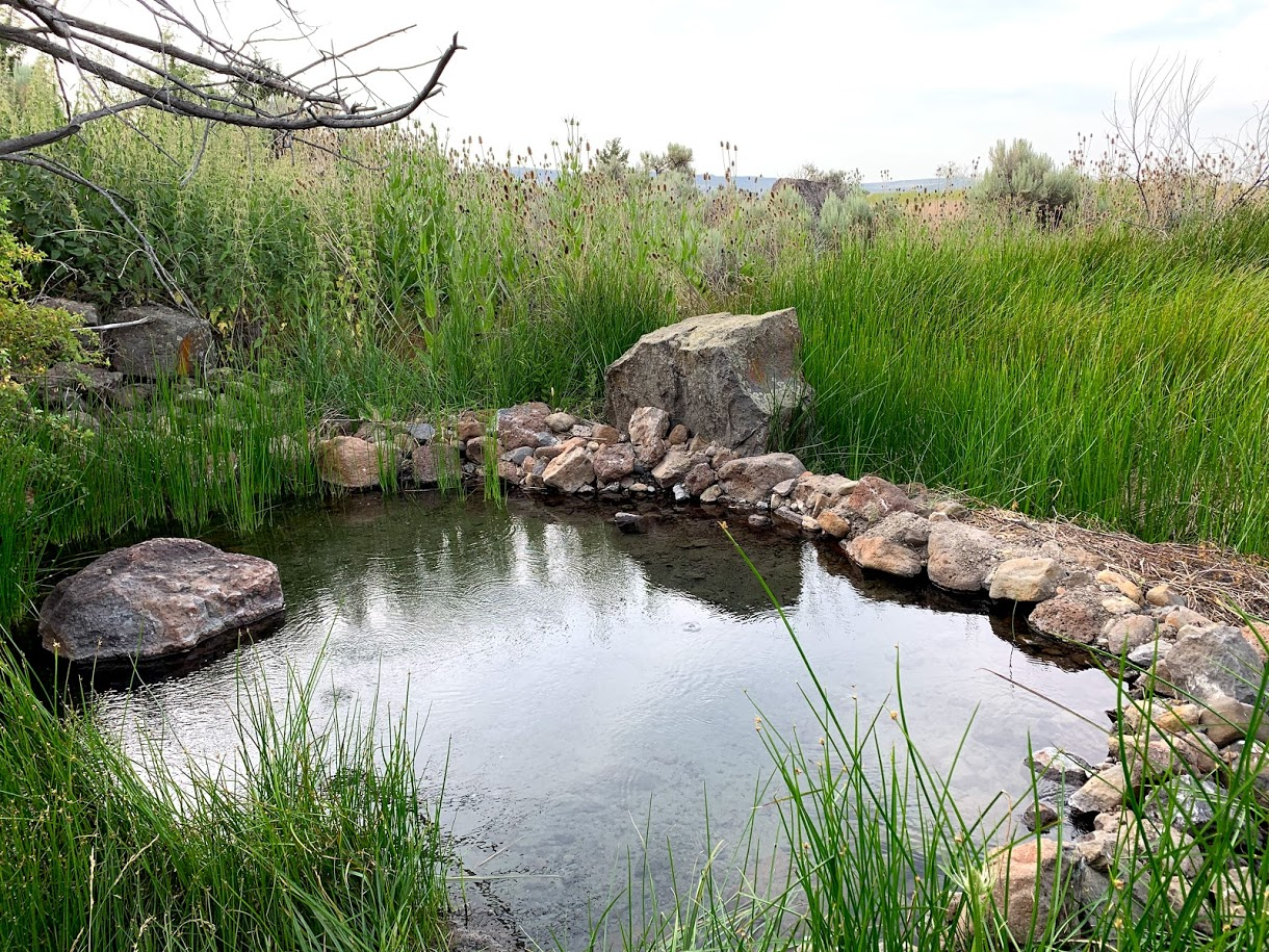 small hot spring pond surrounded by rocks and weeds in Steens Mountain Wilderness