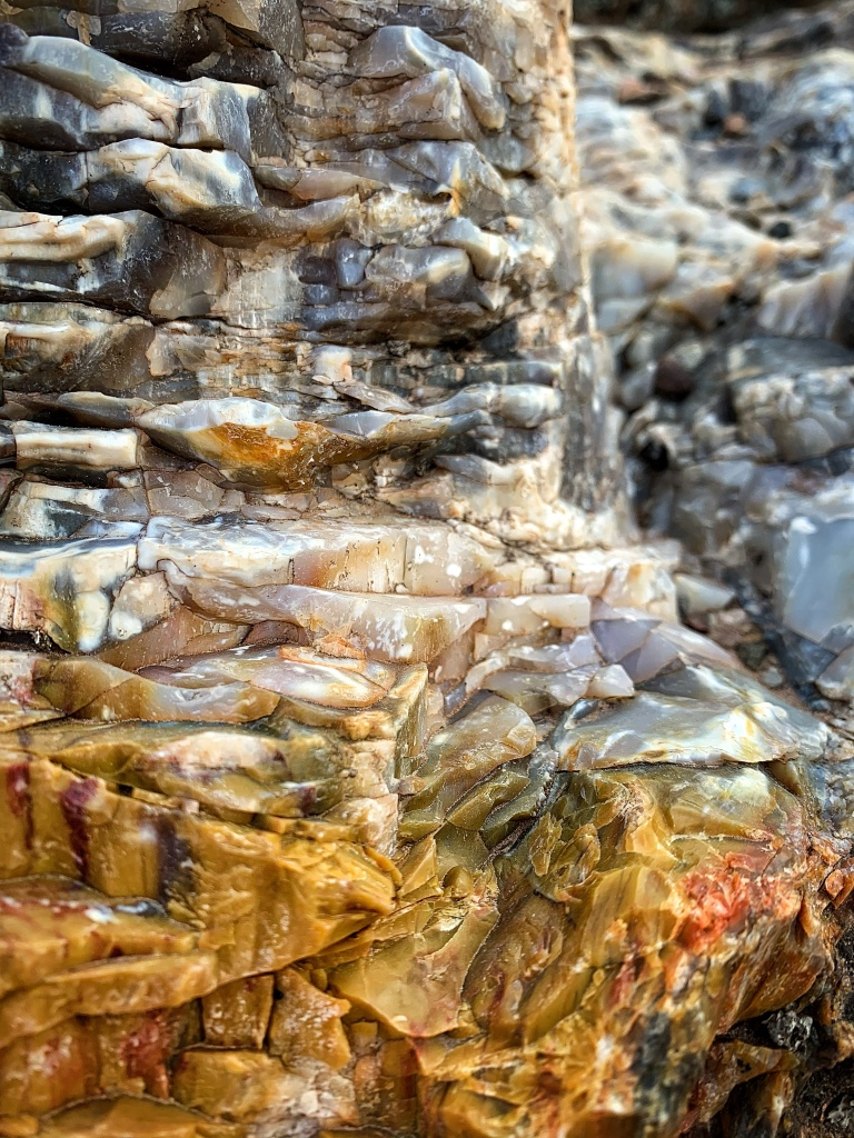 Yellow, white and gray sample of petrified wood