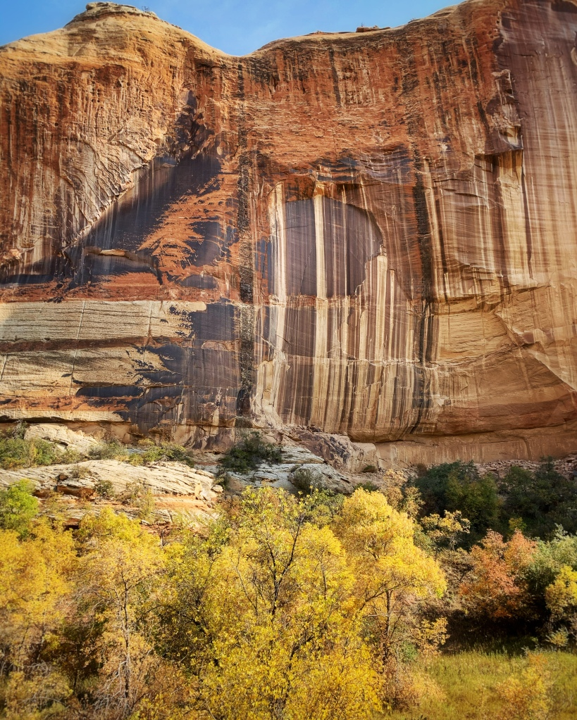 Striped serpentine canyon walls with fall foliage in the foreground