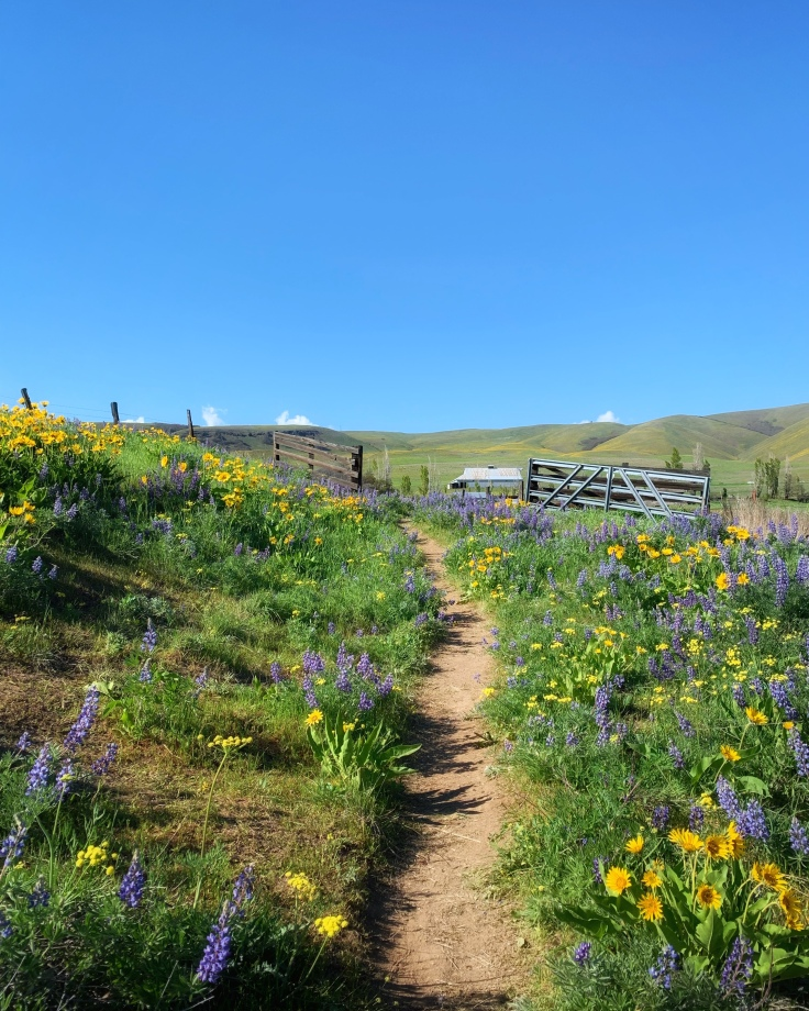 hiking trail surrounded by purple and yellow wildflowers with gate and barn in background