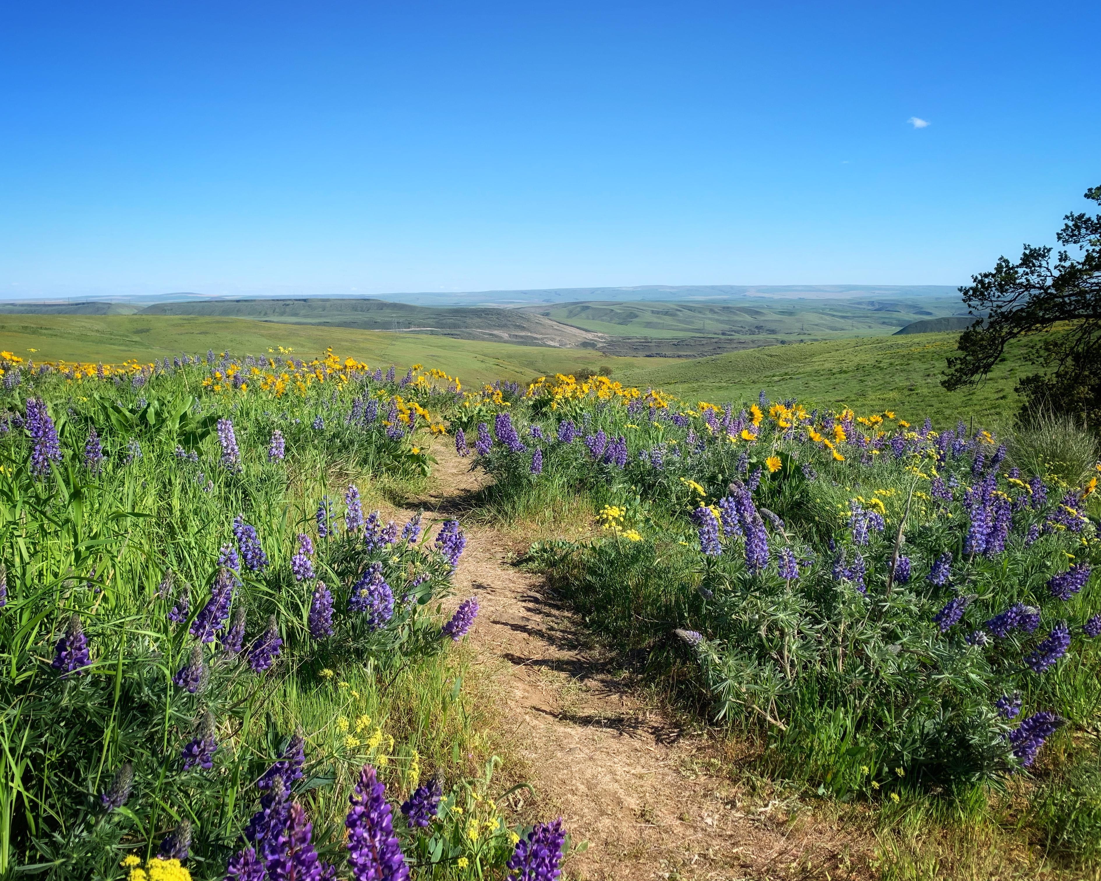 purple and yellow wildflowers along hiking trail
