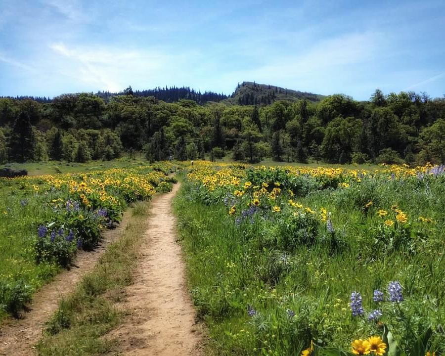 hiking trail through field of yellow and purple wildflowers