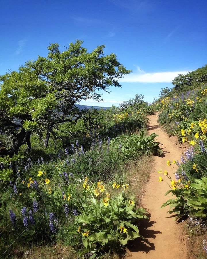 hiking trail surrounded by purple and yellow wildflowers