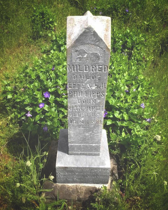 pioneer gravestone surrounded by tiny purple wildflowers